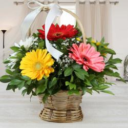 Mixed Gerberas Basket Arrangement