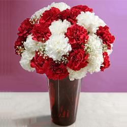 Vase of Red and White Carnations